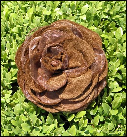 Čokoládově hnědá růže