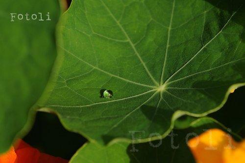 Kapka rosy na listu