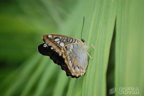 fotografie - odpočívající motýl