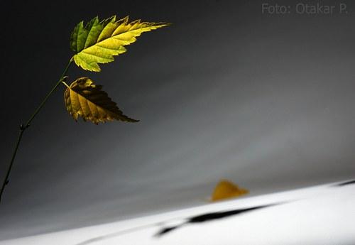 Když zeleň odchází