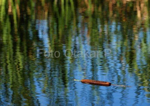 V rybníčku