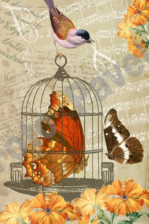 Vintage motiv - motýl v kleci a sýkorka