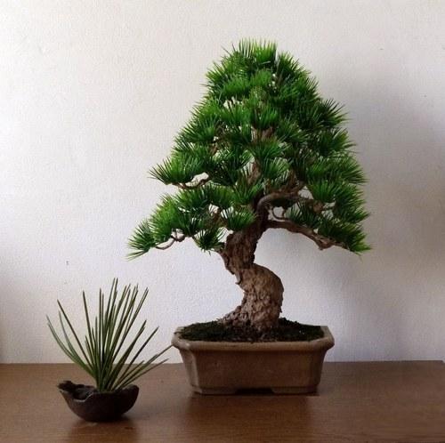 Mazlik větší - nepravá bonsaj do interieru