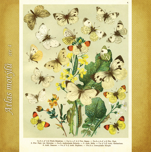 Motýli - str. 4