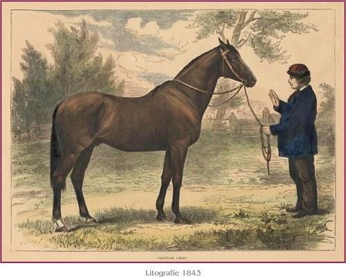 Koně II