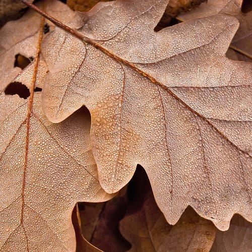 Podzim (nejen) ve dvou