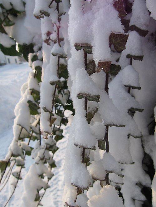 Vzpomínka na zimu - jako provázky