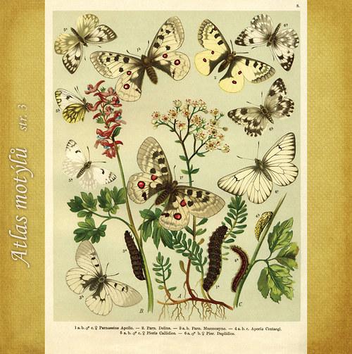 Motýli - str. 3 - formát A4