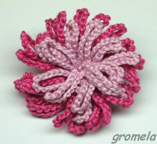 Růžová dvoubarevná chryzantéma