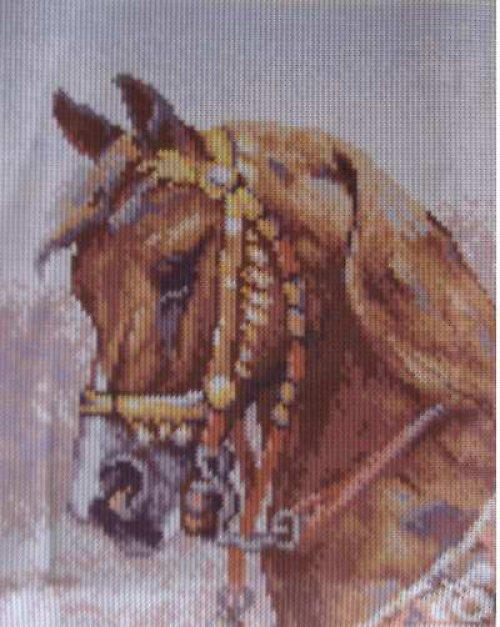 Obrázek k vyšití - hlava koně