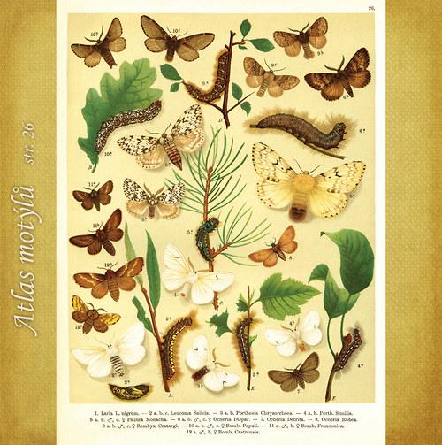Motýli - str. 26 - formát A4