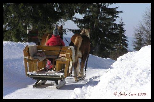 Koňský potah se saněmi