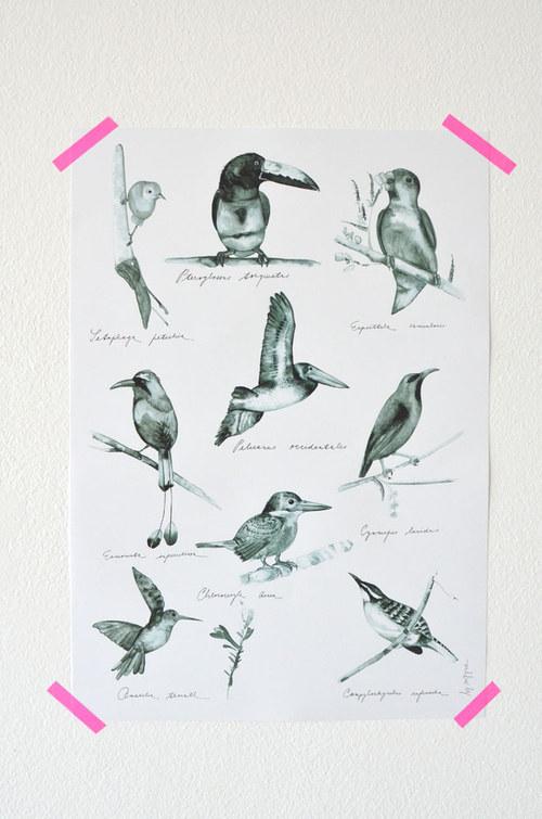 Plakát Ptáci Střední Ameriky - černobílý