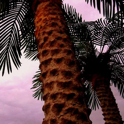 ve stínu palmy