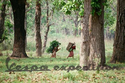 Na okraji pralesa