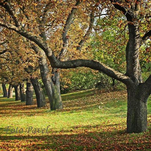 ... ze série Podzimní Vyšehrad
