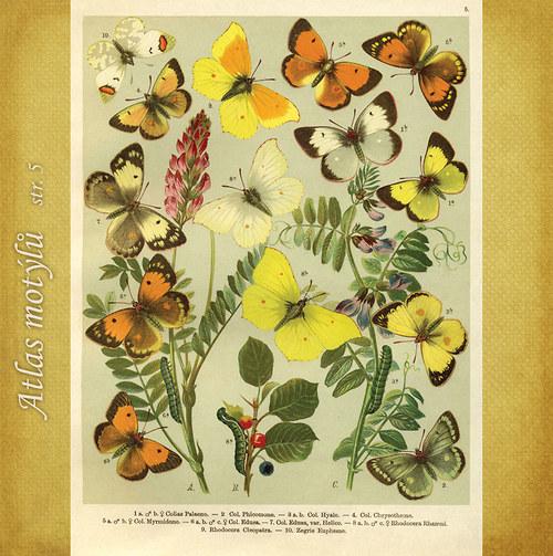 Motýli - str. 5