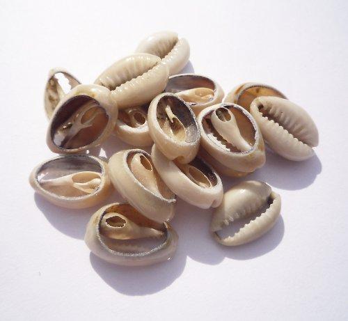 Mušličky řezy cca 15 mm (3 ks)