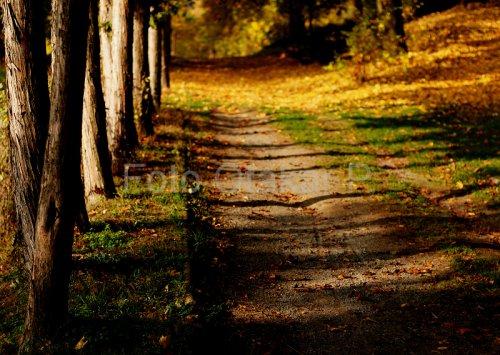 Podzimním parkem