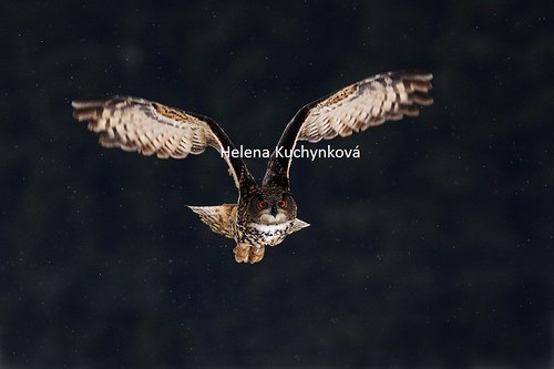 Kurz fotografování dravci a sovy