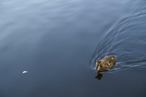 pidi torpédo na Prášilském jezeře:o)