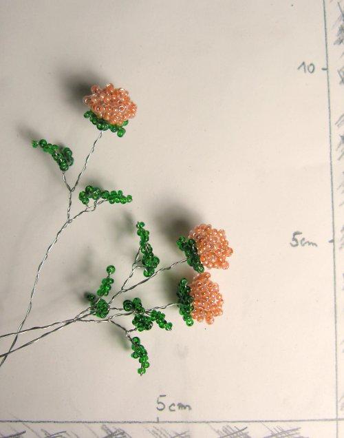 Růže korálková světle oranžová