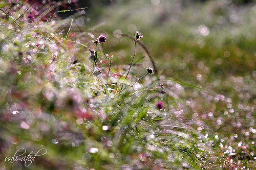 """Fotografie \""""Brilianty v trávě\"""""""