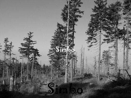 Nemocný les SLEVA