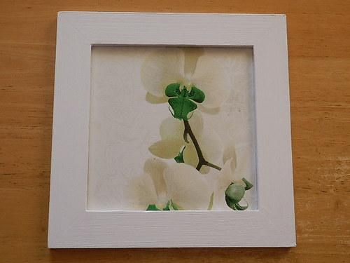 Obrázek Bílá orchidej