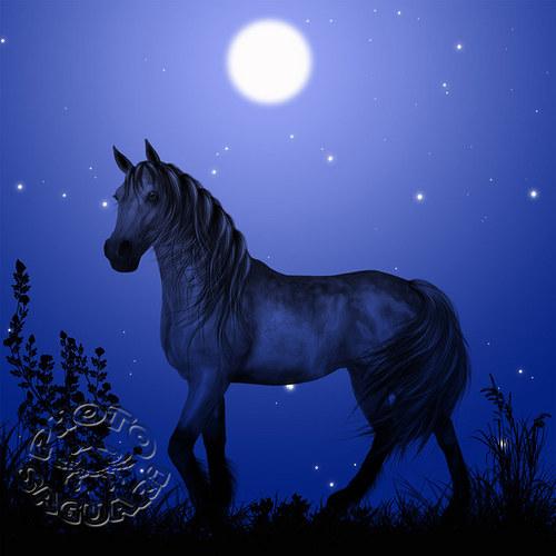 polnočný kôň ... IV