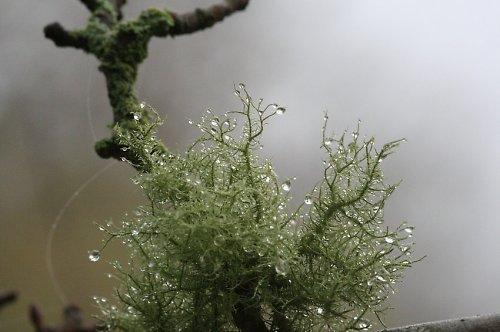 Suchozemský korál