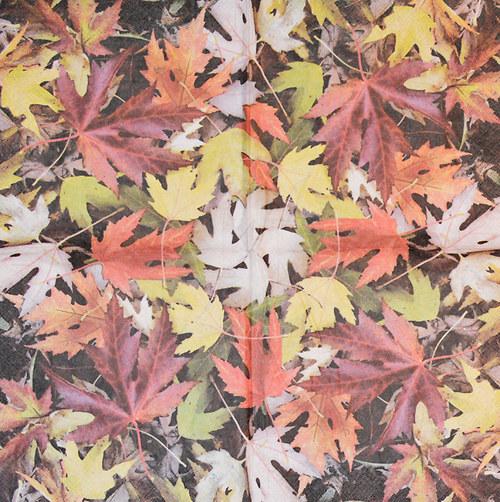 Ubrousek - podzimní listí