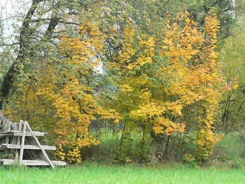 Podzim v zahradách