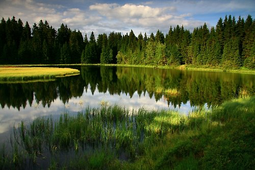 Lesní rybníček