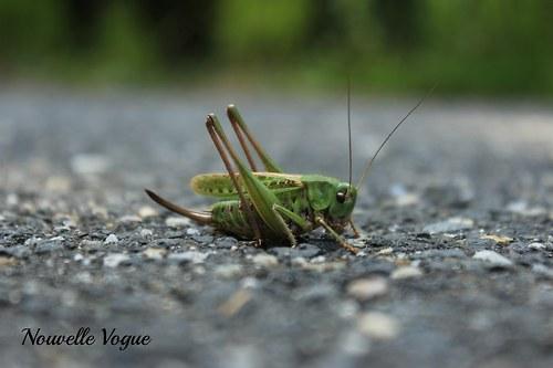 Podívám se ti na kobylku