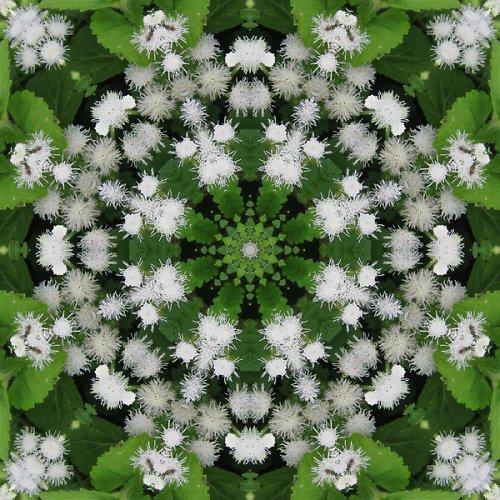 Mandala bílého chmýří
