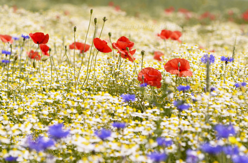 Květinové shromáždění - autorská fotografie