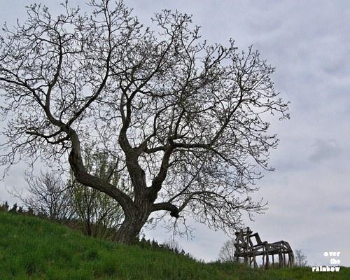 Osamělý strom - autorská fotografie, Giclée