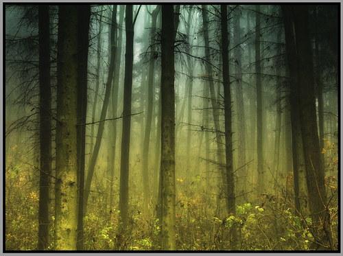 Mlha v lese