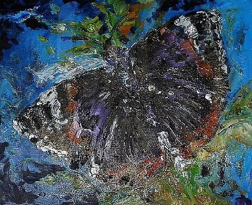 Motýl babočka admirál
