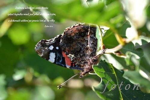 Motýl s biblickým veršem