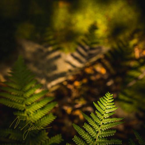 Lesní poezie