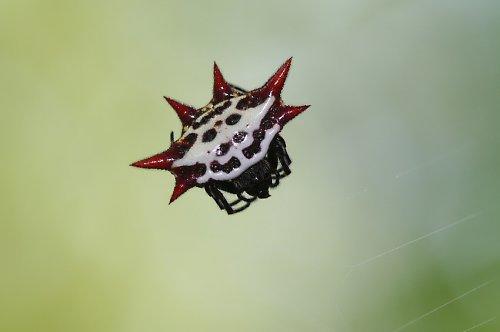 Z pavoučí říše