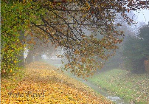 Podzim u potoka