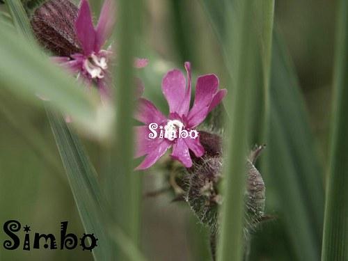 Květina SLEVA