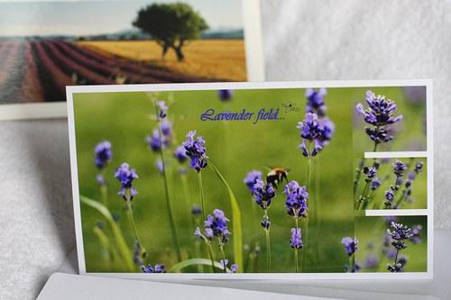 Lavender field...