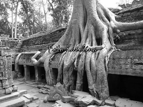 Fotografie Kambodža - Kořeny v chrámu