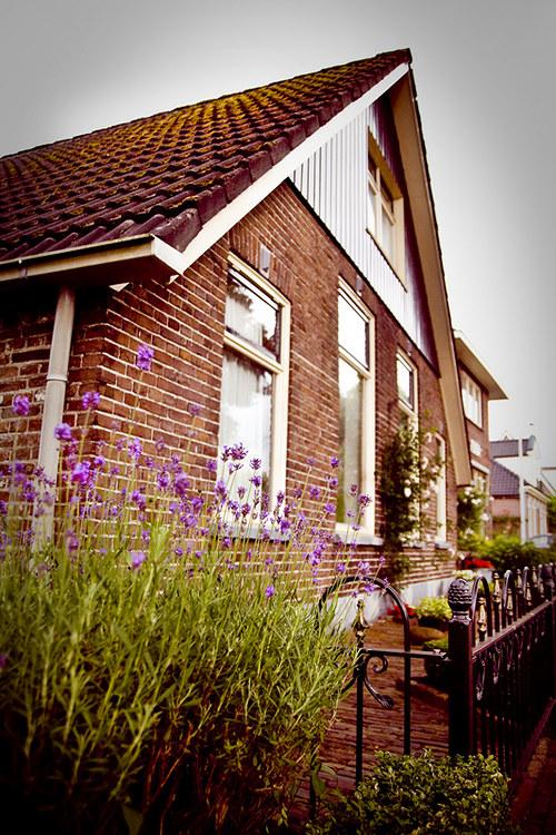 Dům s levandulí