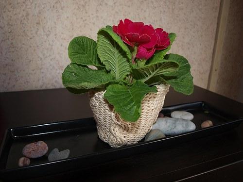 obal na květináč - bavlněný malý
