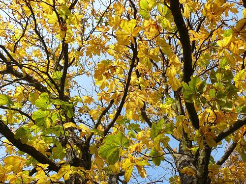 Podzimní veselí